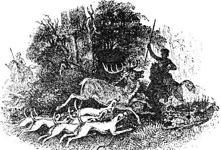 Pwill caça um sobrenatural cervo