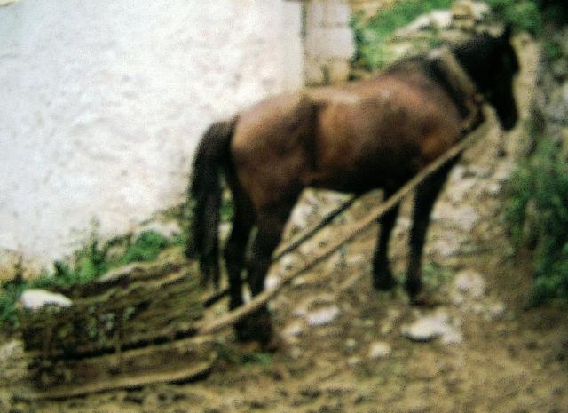 Carro sem rodas do occidente de Galiza e NAsturias. I